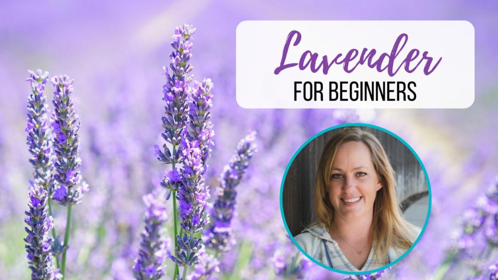Lavender for Beginners